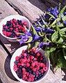 Fruta mjekesore2.jpg