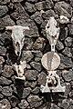 Fundación César Manrique - Skulls 02.jpg
