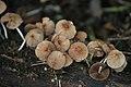 Fungus on the Tree (5464885603).jpg
