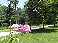 Futoški park, spomenik prirode, Novi Sad 7.JPG