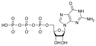 Guanylate cyclase - Image: GTP chemical structure