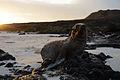 Galápagos Inseln, Ecuador (13918256043).jpg
