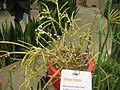 Gardenology-IMG 7964 hunt10aug.jpg