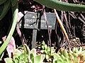 Gardenology.org-IMG 2526 hunt0903.jpg