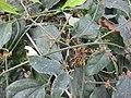 Gardenology.org-IMG 7810 qsbg11mar.jpg