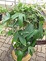 Gardenology.org-IMG 8006 qsbg11mar.jpg