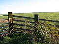Gate into a mash pasture - geograph.org.uk - 625003.jpg