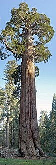 The General Grant tree in Kings Canyon National Park