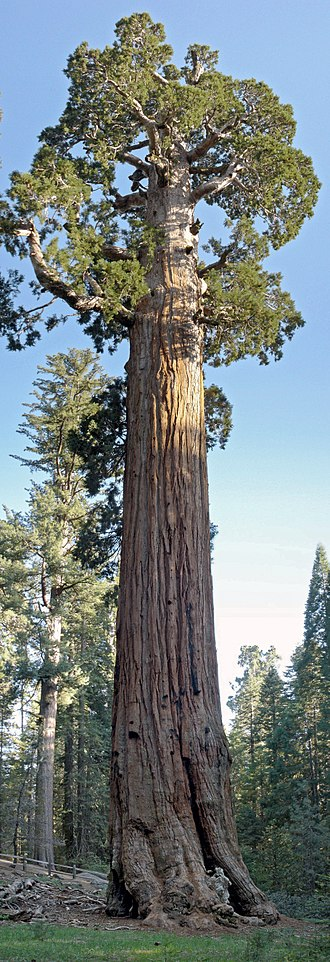 General Grant (tree) - The General Grant tree is located in General Grant Grove, Kings Canyon National Park