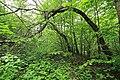 Geschützter Landschaftsbestandteil Schubertgrund in Sachsen. 2H1A1263WI.jpg