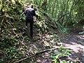 Gestion de la renouée du Japon pour protéger un muret à fougère (Carrière des Nerviens).JPG