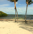 Gfp-florida-keys-key-largo-beach-and-trees.jpg