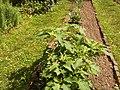 Giardino botanico di Brera (Milan) 154.jpg