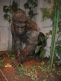 datování fosilních wiki připojení 44