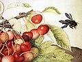 Giovanna garzoni, piatto di ciliege con rose, baccello e ape legnaiola (xylocopa violacea) 1642-51 ca., 013.JPG