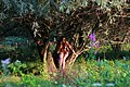 Girl in the Tipova Gorge in Summer.jpg