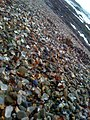 Glass Beach 6.jpg