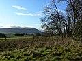 Glassart Den Woodland - geograph.org.uk - 1597342.jpg