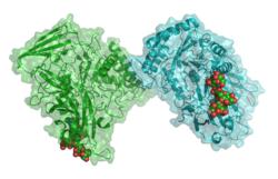 Β-Glucuronidase