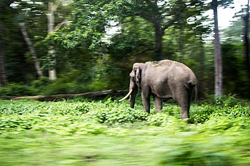 Going past a Tusker.jpg