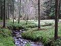 Gortin Glens Forest Park (22) - geograph.org.uk - 1712688.jpg