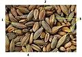 Grains mix.jpg