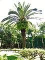 Great Fern Palm in Beian Park.jpg