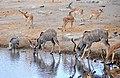 Greater Kudu, Impala and Warthog, Chudop, Etosha.jpg