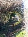 Green Tunnel on footpath - geograph.org.uk - 1118334.jpg