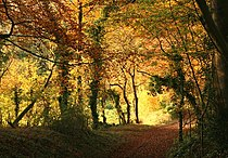 Green lane from Tunworth to Winslade - geograph.org.uk - 605777.jpg