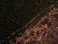 Green woodland from above (Unsplash).jpg