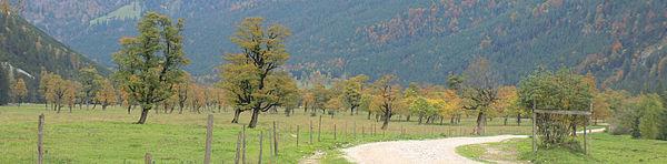 Großer Ahornboden bei Eng - Bergahornwald.jpg