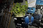 Growing Plants and Vegetables in a Space Garden.jpg