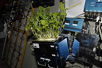 Astrobotany - Lettuce being grown and harvested in the International Space Station before being frozen and returned to Earth.