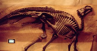 Gryposaurus - G. notabilis (formerly G. incurvimanus), collected 1918