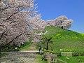 Gyoda Maruhakayama Tumulus In Spring 2.JPG