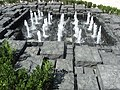 HK Wan Chai Harbour Road Garden fountain pool Oct-2012.JPG