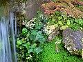 Hakone Gardens, Saratoga, CA - IMG 9209.JPG