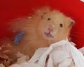 Hamster-teeth.png