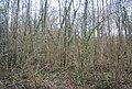 Hanger Woods - geograph.org.uk - 1742450.jpg