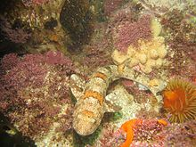 ecology of benthic polychaetes in the Former and current projects address estuarine benthic condition, trophic ecology,  the benthic ecology group works  and temperature on polychaete .
