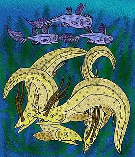 <i>Harpagofututor</i> genus of fishes