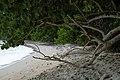 Havelock Island, Beach, Andaman Islands.jpg