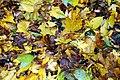 Herbstlaub2.jpg