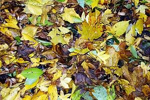 Herbstmusik - Autumn leaves