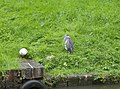 Heron at Moore - geograph.org.uk - 533694.jpg