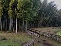 Higashikurume chikurin park Jan 24 2021 various.jpeg