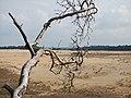 Hoge Veluwe National Park, Otterlo - panoramio (6).jpg