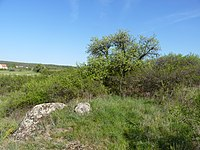 Horáčkův kopeček, okres Znojmo (6).JPG