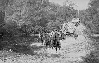 Kings Highway (Australia) - Image: Horse Team Carting Goods Nelligen To Braidwood C1902